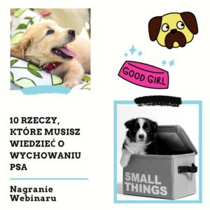 10 rzeczy, które musisz wiedzieć o wychowaniu psa