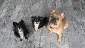 Opowieści O psach i dla psów